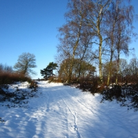 Delamere in the Snow (Again...)