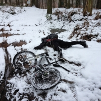 Delamere in the Snow